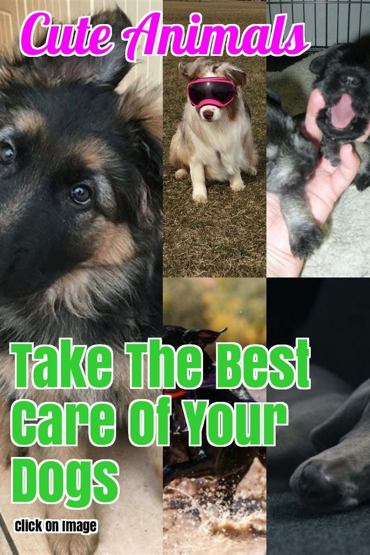Need Help With Your Dog Here Are Some Tips Your Dog Pet Care Dogs Pet Dogs