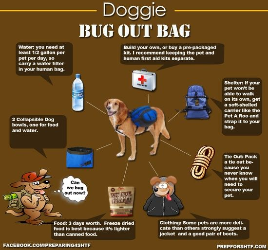 Homesteading Survivalism: the stuff you will need for your Doggie Bug Out Bag.
