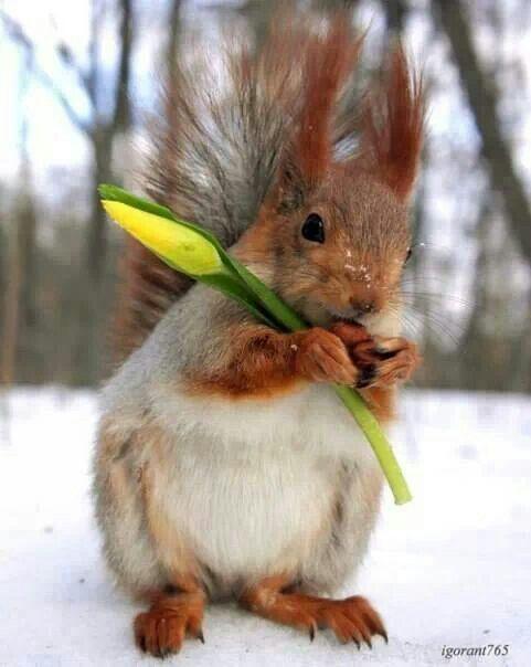 https://i.pinimg.com/736x/42/b2/a7/42b2a7ed85f684465c624b292e8a86e9--wild-animals-baby-animals.jpg