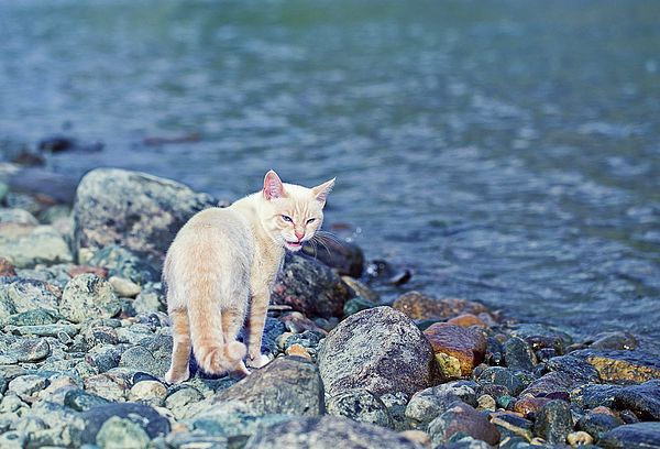 White Cat Near River Photograph by Oksana Ariskina