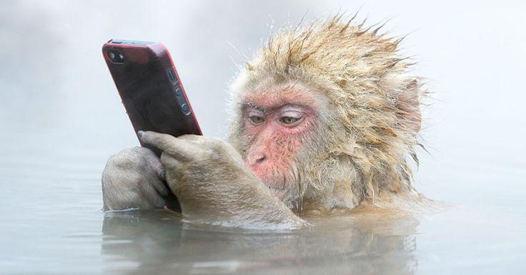 image-singe-telephone