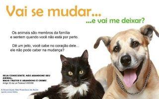 Bichos de Companhia: Período de férias gera aumento de cães e gatos abandonados nas ruas