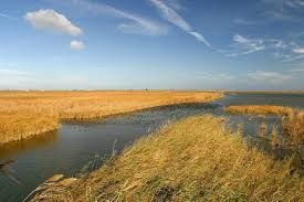 El Delta....Terra d'arròs
