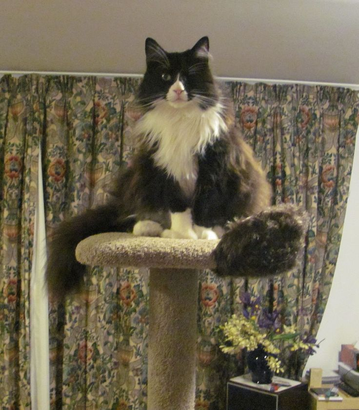 Charlie king of the castle!