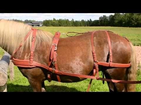 Välysliike hevosen valjastuksessa - YouTube