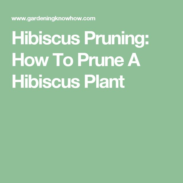 Hibiscus Pruning: How To Prune A Hibiscus Plant