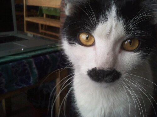 moustache!
