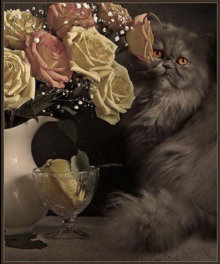 «Сначала у меня появились кошки. Совершенно незаметно, одна за одной – как им и свойственно... А потом пришло увлечение фотографией, в частности фотонатюрмортами». Элеонора Григорьева, фотохудожник Любители кошек согласятся со мной, что эти животные настолько артистичны и обаятельны, что возникает жгучее желание запечатлеть их: краской или карандашом на бумаге, на фото… Возник даже…
