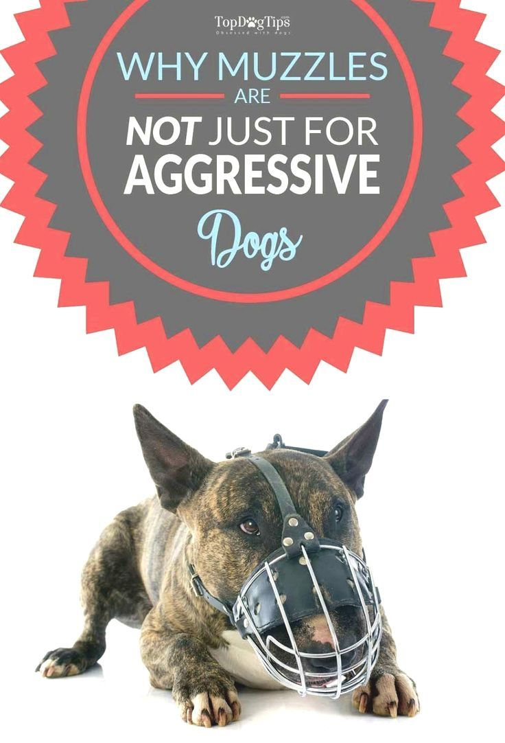 How To Stop Dog Aggression Aggressive Dog Dog Muzzle Dog Training