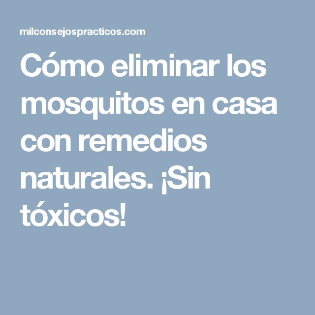 Cómo eliminar los mosquitos en casa con remedios naturales. ¡Sin tóxicos!