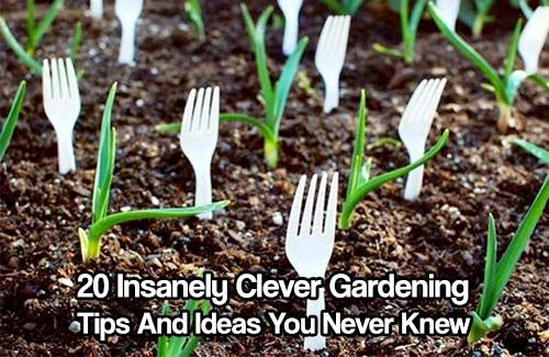 20 Insanely Clever Gardening Tips And Ideas. Not everyone has green fingers. Use these clever gardening tips and ideas to help you garden this spring.