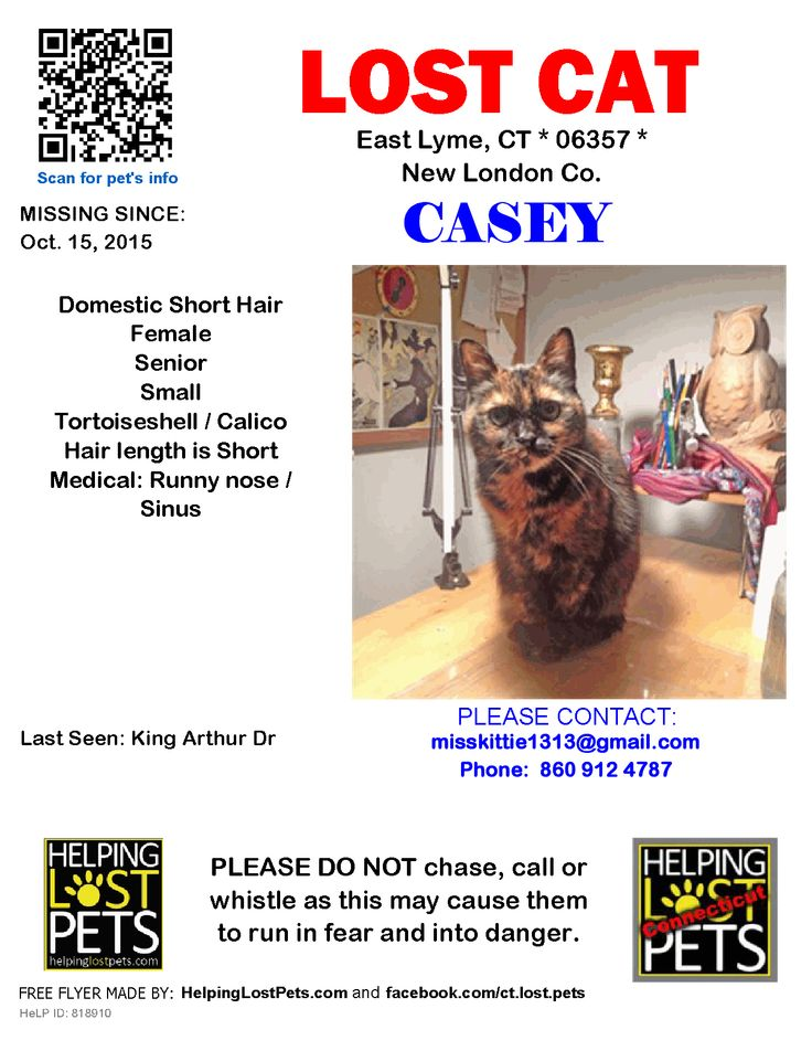 Lost Cat Female East Lyme, CT, USA 06357 Lost cat