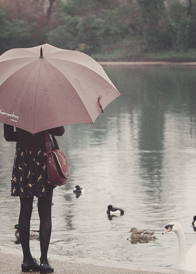 At the Duck Pond // watch the park ducks in the rain