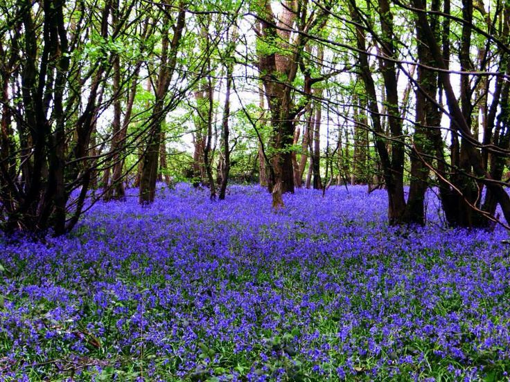 By Craig Millar: Spring Photos, Craig Millar, Photos Challenges