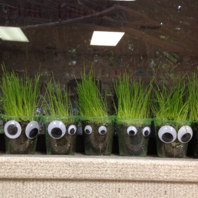 Grass Heads In Clear Plastic Cups Dig Into Reading