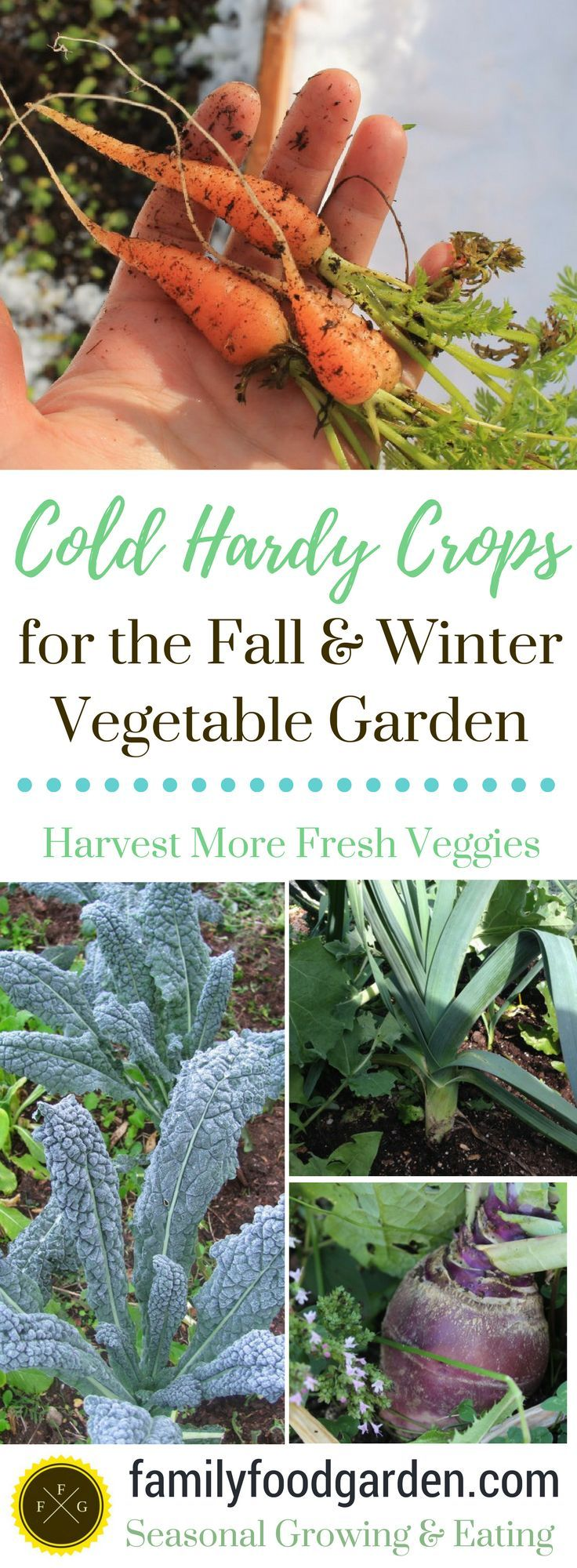 23 best herb vegetable garden ideas images on pinterest herb
