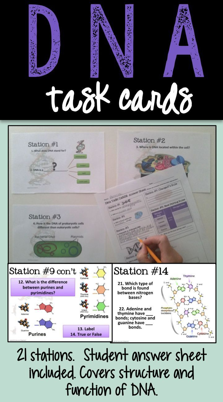 DNA Task Cards. These really helped my kids learn about the structure of DNA!