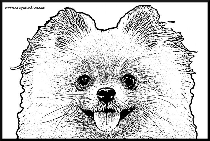pomeranian coloring pages free - photo#2