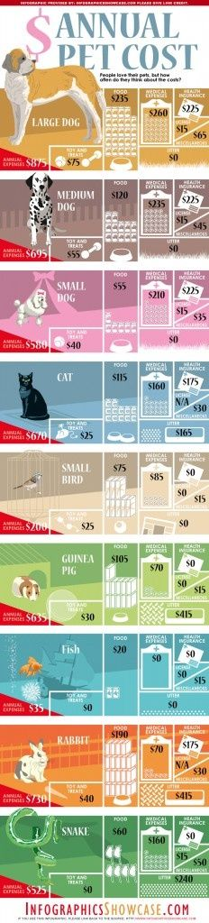 Fresh on IGM > Annual #Pet Cost: Cats, Dogs, Birds, Fishes, Rabbits are some of the most popular pets we like to host. Its good to know how much it costs on average owning and caring of a pet per year. Some of the typical expenses like food, medical treatment, heatlh insurance, toys and litter vary and are largely... > http://infographicsmania.com/annual-pet-cost/