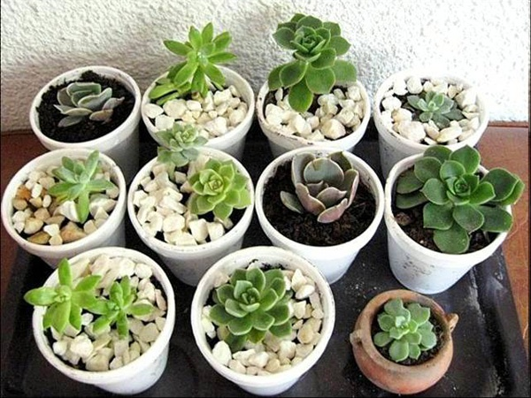 Allegre, simpatiche e con uno stile tutto loro, le piante grasse in casa possono donarci una nota in più di colore per la vita indoor! http://www.arredamento.it/articoli/articolo/arredo-esterno/2501/piante-grasse-in-casa.html