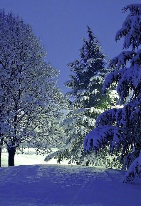 Pin By Lisa Moreland On Snow Winter Landscape Winter Scenery Winter Pictures