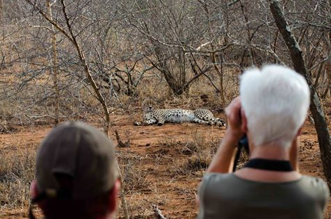 This was definitely an encounter at Shiduli the morning, that our guests won't forget in a hurry! This magnificent Cheetah was relaxed and quite content to be the focus of attention!