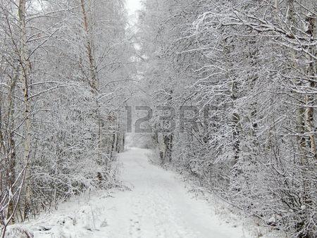 Зимний пейзаж в лесу