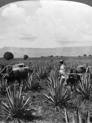 How to Drink Mezcal - Cocktail Ideas and Recipes for Mezcal - Esquire