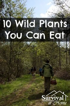 10 Wild Plants You Can Eat
