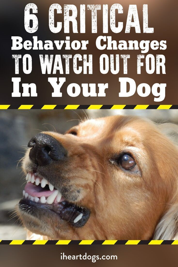 These Are Important For Your Pup S Sake Puppycratesideas