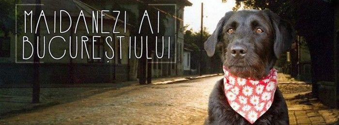 De Humans of New York știm. Știm și de Oameni ai Bucureștiului. Mai nou, am aflat și de Maidanezi ai Bucureștiului, o nouă pagină de Facebook, și am decis să îi luăm pe admini la întrebări.