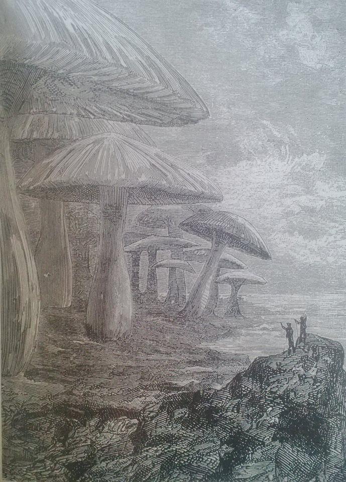 La foresta dei funghi giganti, illustrazione di Édouard Riou para Jules Verne, Viaggio al centro della terra, 1864.
