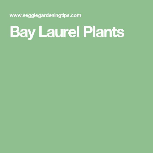 Bay Laurel Plants