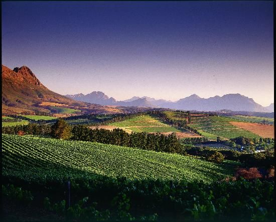 Stellenbosch, one of South Africa's oldest towns and the heart of the wine industry