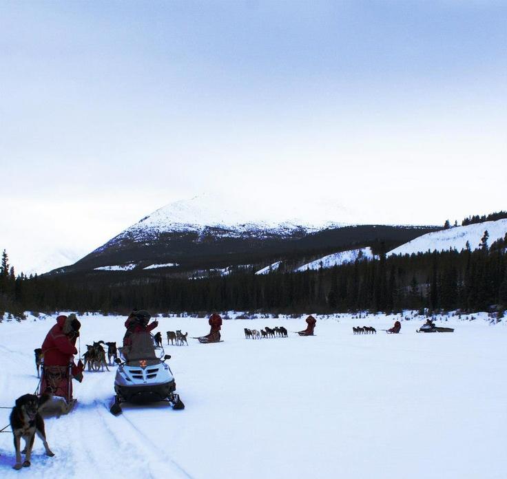 The sledding teams