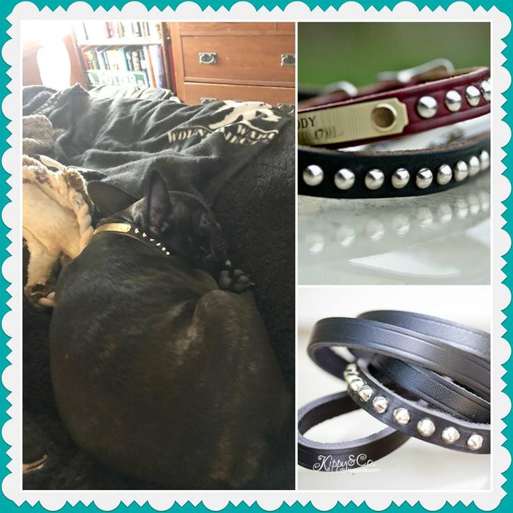 Fiona looks beautiful in the new studded collar! https://www.kippyandco.com/products/small-dog-cone-stud-collar
