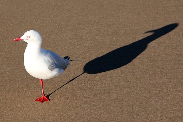 one legged seagull!