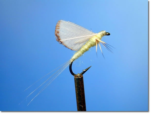 Pale morning compara dun with burnt feather wings for Fly fishing feathers