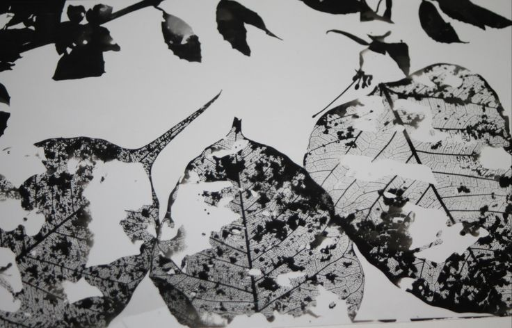 Photogram//nature. Selective development.