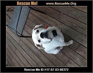 ― Pennsylvania Boxer Rescue ― ADOPTIONS ―RescueMe.Org
