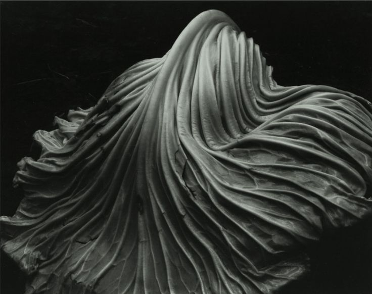 Edward Weston's Cabbage Leaf. 1931. His vegetable images look just as sexy as his nudes.