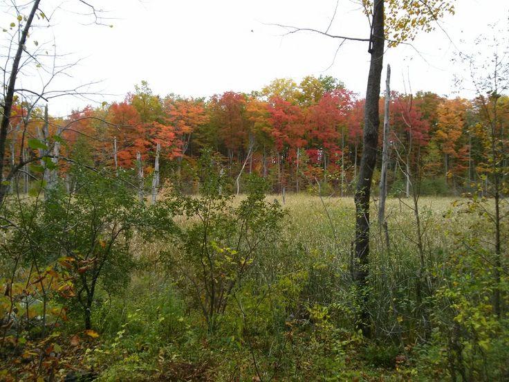 Les couleurs de l'automne / Autumn colors
