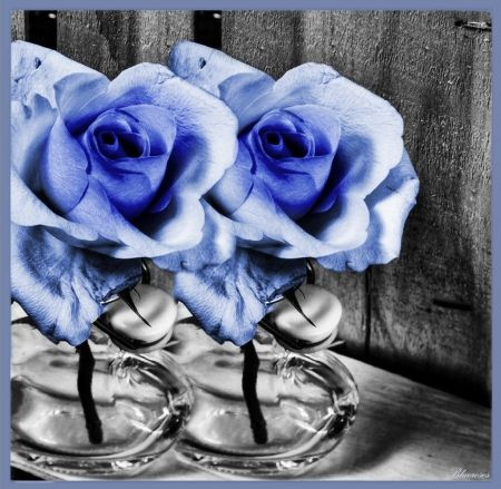 *Τwins* - flowers, two, clear, blue, roses, vases, blue rose