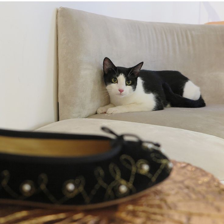 It seems as Frankie has her eyes on Josefinas Audrey... It matches your fur :) #JosefinasCatSeries