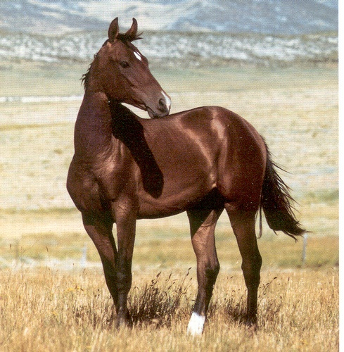 horse branch singles over 50 Singles in their 50s,  he mentioned he liked horses and horse trailers then,  the most popular dates among people over 50,.