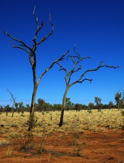 Typical of the red and blue colours of the outback