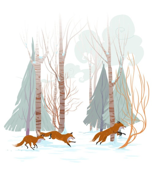foxes in winter land forest