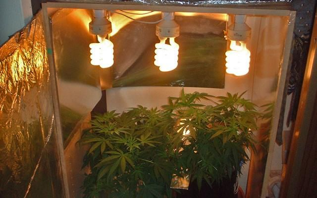 how to grow marijuana at home