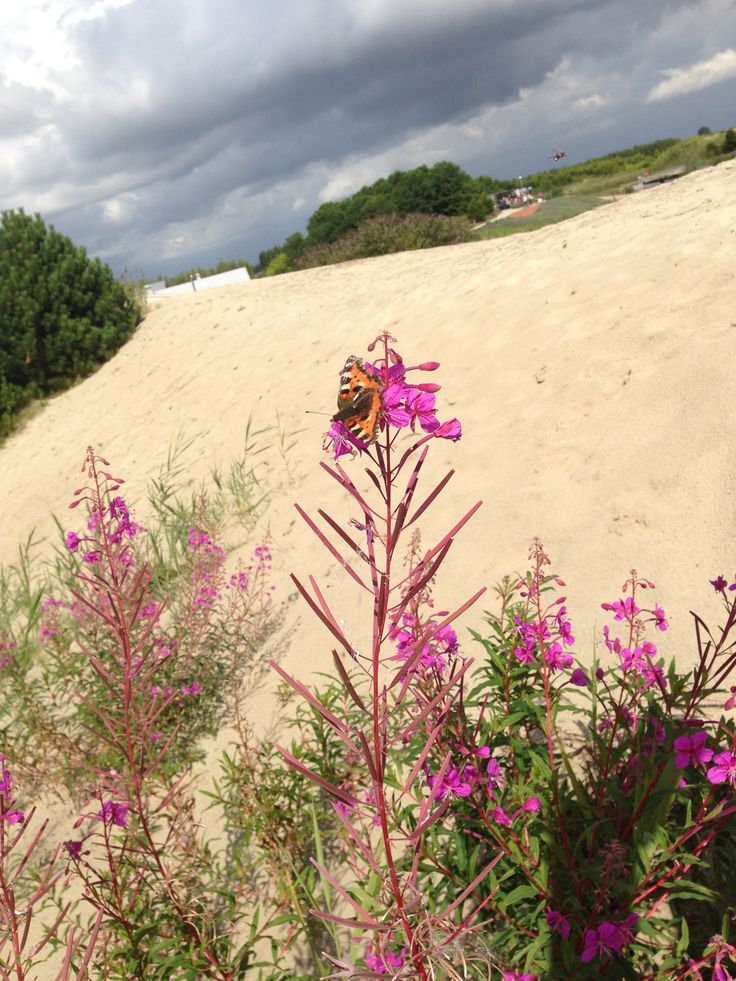 Kleurige bloemen en vlinders