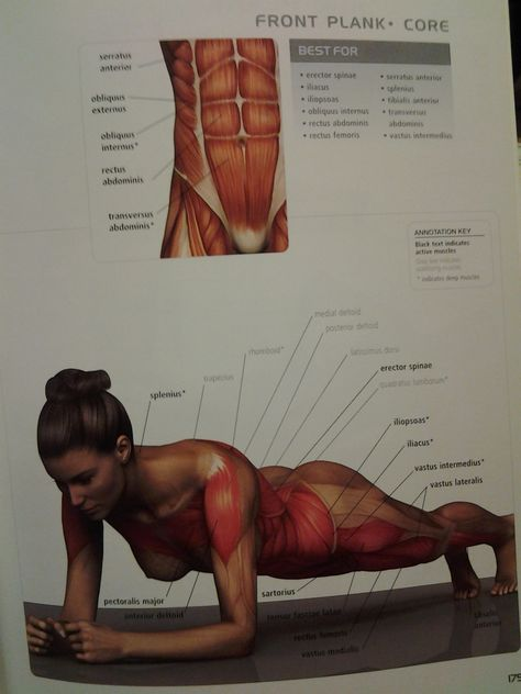 CORE: plank (all abdo muscles, ant thigh muscles (tensor fascia lata, rectus femoris, vastus muscles), ant deltoid) 90 sec
